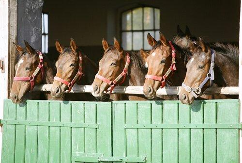 Pferdehaltung in Pferdebox oder Offenstall?
