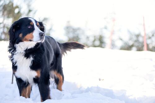 Reiseziele für Hundebesitzer im Schnee.