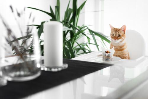 Rezepte für Katzentorten die sogar gesund sind.