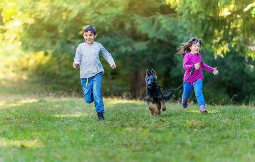 Schäferhund rennt mit Kindern über eine Wiese