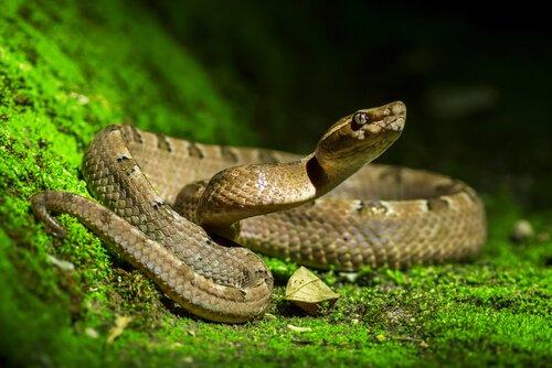 Schlange im Garten: wie verhält man sich?