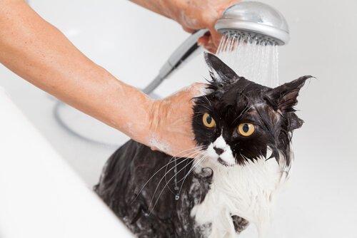 Schluckauf bei Hunden und Katzen mit Baden loswerden