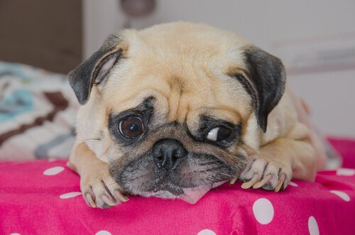 Schluckauf bei Hunden und Katzen: Ursache