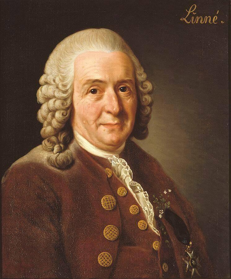 Taxonomie des Haushundes nach Carl von Linné