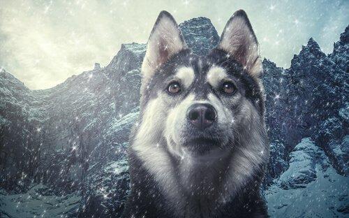 Taxonomie des Haushundes