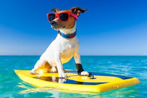 Urlaubsplanung mit deinem Hund