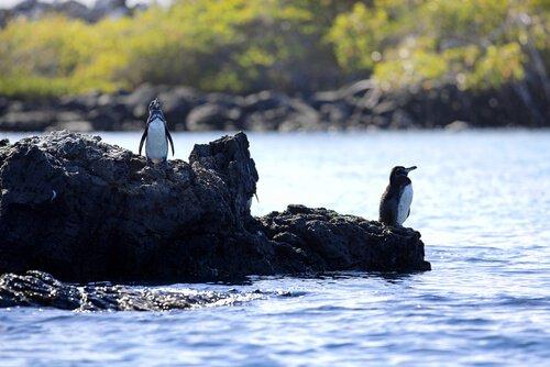 Vögel der Galapagos-Inseln