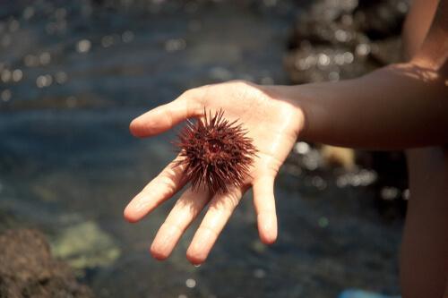 Wenn ma von einem Seeigel gestochen wurde, muss man die Wunde gut säubern.