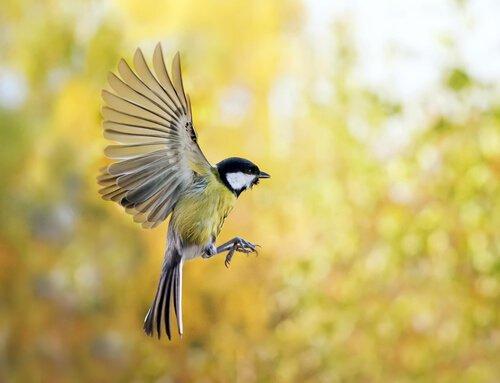 Wie lockst du Vögel in deinen Garten?