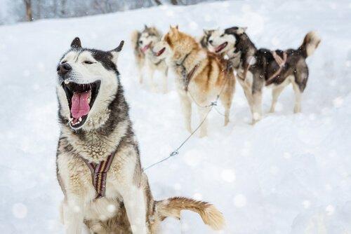 4 Tipps für männliche Hundenamen