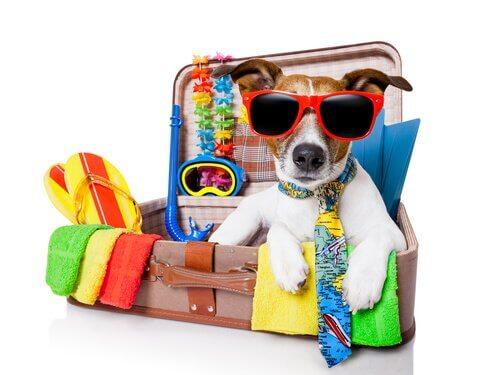 Bereite deinen Hund auf den Sommer vor