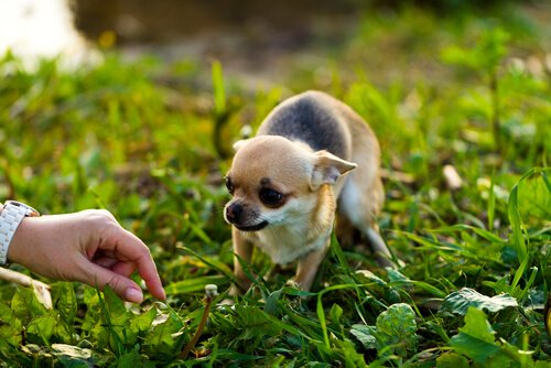 Annäherung an einen ängstlichen Hund: unsere Tipps