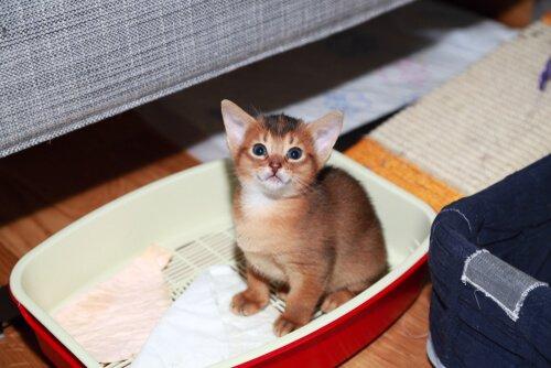 Ein Kätzchen lernt
