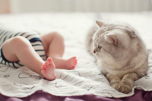 Baby und Katze verstehen sich