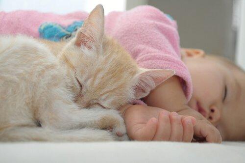Beziehung zwischen Katzen und Babys