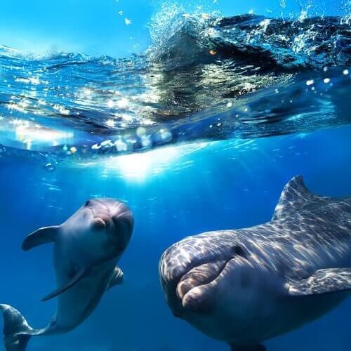 Delfine spielen miteinander