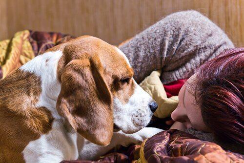 Die sozialen Fähigkeiten des Hundes: Ausschlussprinzip