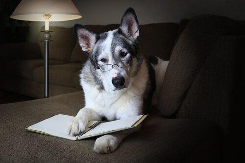 Die sozialen Fähigkeiten des Hundes