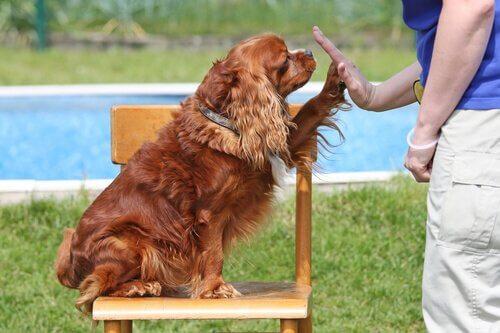 Die sozialen Fähigkeiten des Hundes: Fast Mapping