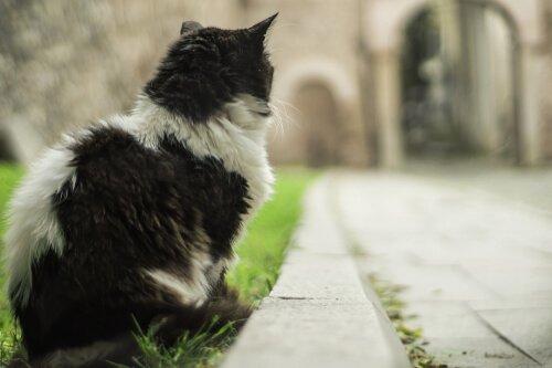 Dokumentarfilm über Katzen
