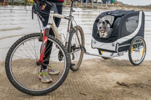 Ein nützlicher Begleiter: Fahrradanhänger für Hunde