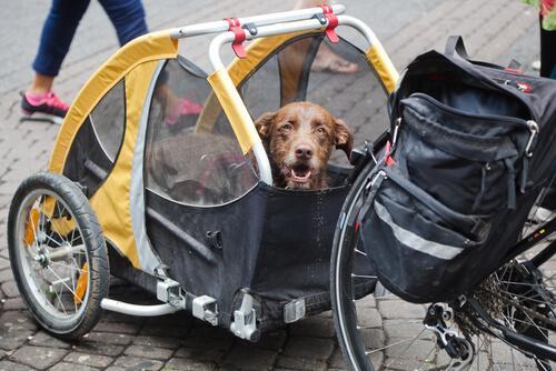 Fahrradanhänger für Hunde können zur Entlastung dienen.
