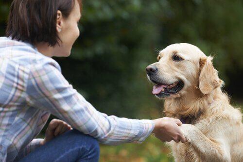 Frau und Hund geben sich die Hand