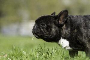 warum Hunde Gras fressen