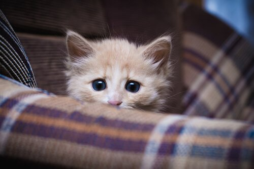 Brauchen Katzen Sozialisation?