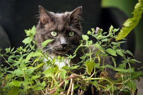 Giftige Pflanzen für Katzen im Garten