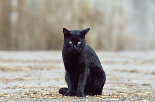 Bringen schwarze Katzen Glück oder Pech?