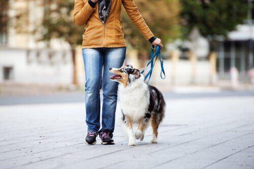 Hund geht brav an der Leine