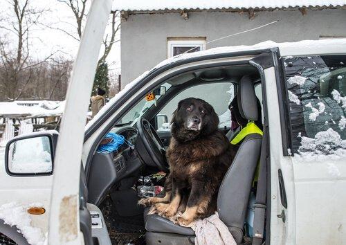 Hat dein Hund Angst vor Autos?