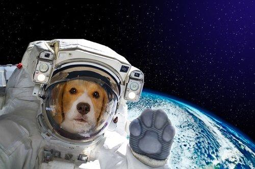 Hund im Weltraum