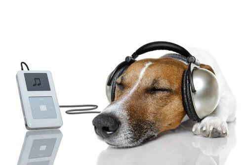 Hund hört Songs