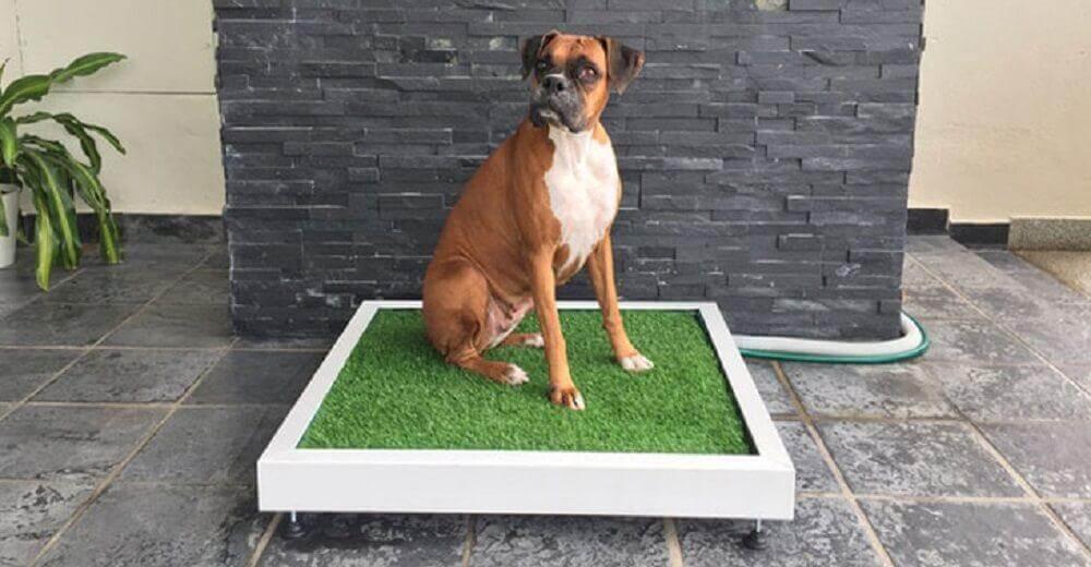 Hundetoiletten für die Stubenreinheit gibt es auch für ausgewachsene Hunde.