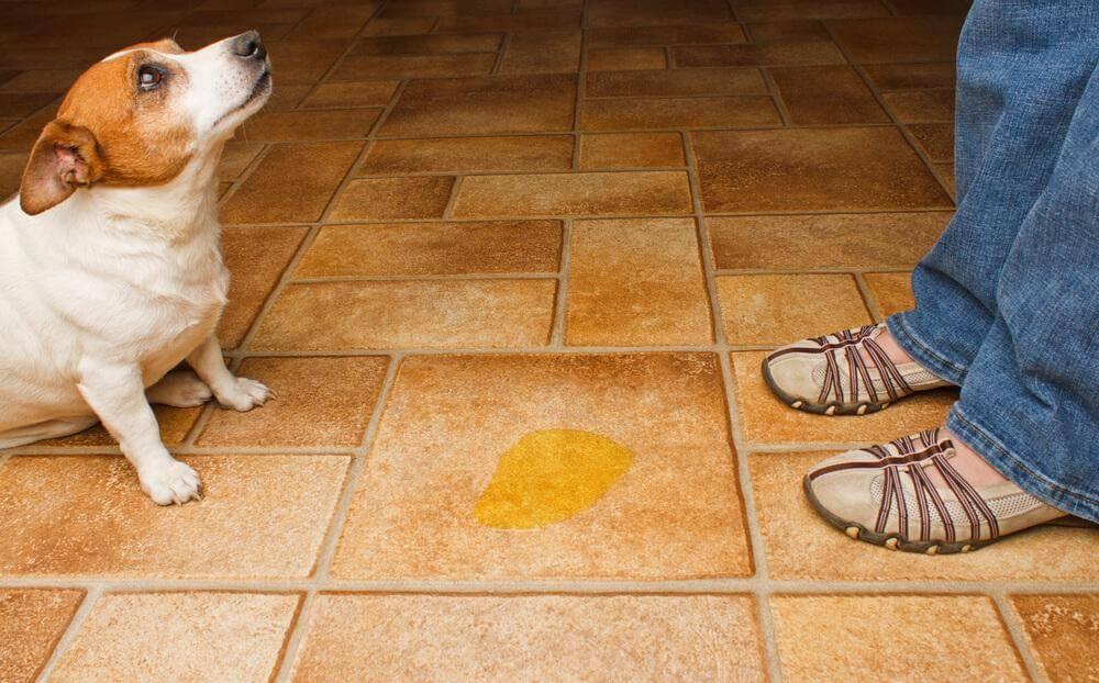 Hundetoiletten für die Stubenreinheit sind hygienischer als andere Methoden.