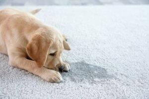 3 Hundetoiletten für die Stubenreinheit