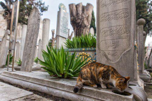 Istanbul: Stadt der Katzen