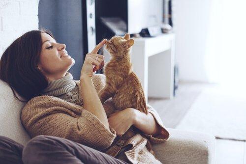 Eine Katze fordert ihre Streicheleinheiten