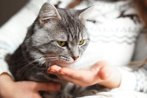 Diese Katze gibt gleich Pfötchen