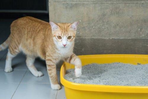 Katze klettert in die Streubox
