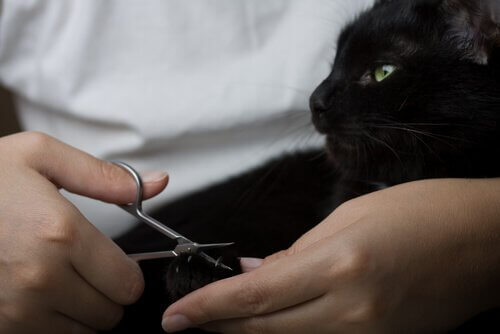 Katze toleriert das Krallenschneiden
