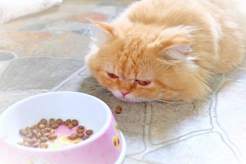 Katze will nichts fressen