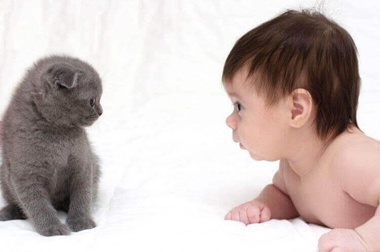 Können Katzen und Babys befreundet sein?