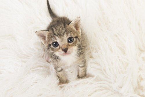 Katzenbaby schaut süß in die Kamera