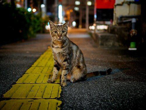 Katzenkolonien und Krankheiten