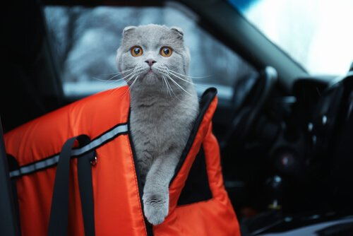 Mit Haustieren reisen