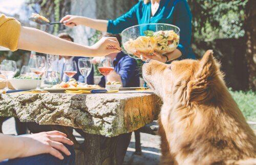 Nudelsalat für Hunde