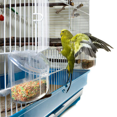 Parasiten bei Vögeln: Behandlung mit Hausmitteln